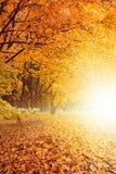 Puesta del sol de la caída en parque fotos de archivo