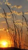 Puesta del sol de la hierba Imagenes de archivo