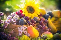 Puesta del sol de la hierba de la fruta de la cosecha del otoño del jardín Imágenes de archivo libres de regalías