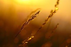 Puesta del sol de la hierba del verano Imagenes de archivo