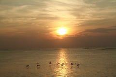 Puesta del sol de la isla de Fripp Imagen de archivo