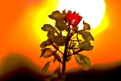 Puesta del sol de la mostaza Imagen de archivo libre de regalías