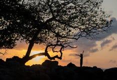Puesta del sol de la mujer del árbol Fotos de archivo libres de regalías