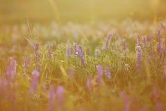 Puesta del sol de la naturaleza Imagen de archivo libre de regalías