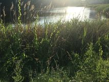 Puesta del sol de la naturaleza del lago fotos de archivo