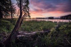Puesta del sol de la orilla del lago por un árbol caido fotografía de archivo libre de regalías