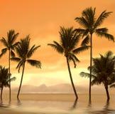 Puesta del sol de la palma Fotos de archivo