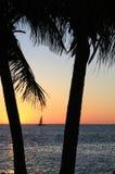 Puesta del sol de la palmera Imagenes de archivo