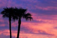 Puesta del sol de la palmera Fotos de archivo