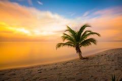 Puesta del sol de la palmera fotos de archivo libres de regalías