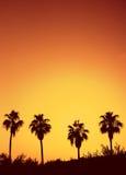 Puesta del sol de la palmera Imagen de archivo libre de regalías