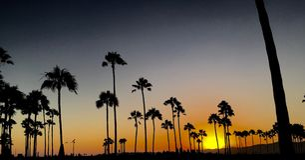 Puesta del sol de la palmera Foto de archivo libre de regalías