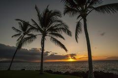 Puesta del sol de la palmera de Hawaii Foto de archivo