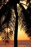 Puesta del sol de la palmera en Honolulu, Hawaii fotos de archivo libres de regalías
