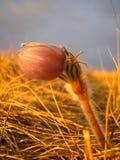 Puesta del sol de la pradera Foto de archivo libre de regalías