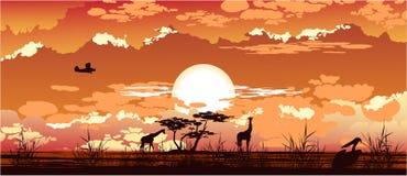 Puesta del sol de la sabana Imágenes de archivo libres de regalías