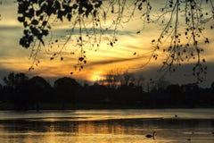Puesta del sol de la salida del sol sobre el lago con los cisnes y los patos Foto de archivo libre de regalías