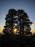Puesta del sol de la silueta de los pinos de avantrén Imagenes de archivo