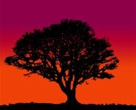 Puesta del sol de la silueta del árbol Imagen de archivo