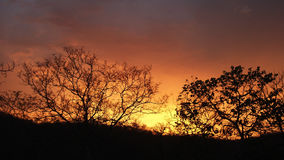 Puesta del sol de la silueta del árbol Imagenes de archivo