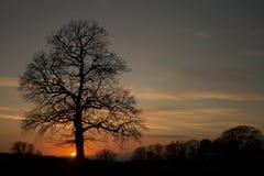 Puesta del sol de la silueta del árbol Imágenes de archivo libres de regalías