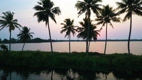 Puesta del sol de la silueta de la palmera almacen de video