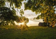 Puesta del sol de la tarde de la caída con las hojas de arce foto de archivo