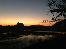 Puesta del sol de la tarde en el campo de arroz del campo de maíz en diciembre Tailandia #025 Fotografía de archivo