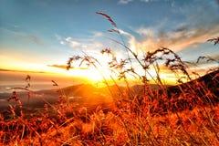 Puesta del sol de la tarde en la hierba superior de la montaña Imagen de archivo libre de regalías