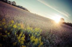 Puesta del sol de la vendimia Fotos de archivo
