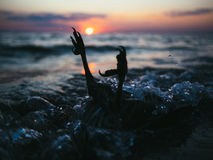 Puesta del sol de la vida Fotos de archivo libres de regalías