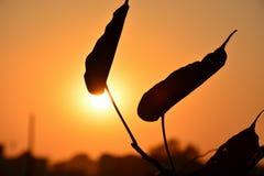 Puesta del sol de las hojas @ Fotografía de archivo