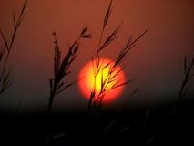 Puesta del sol de las láminas de la hierba fotos de archivo libres de regalías
