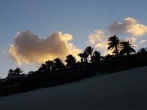 Puesta del sol de las palmas Fotos de archivo