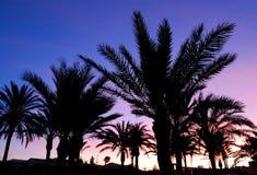 Puesta del sol de las palmeras Fotos de archivo libres de regalías