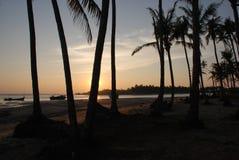 Puesta del sol de las palmeras Foto de archivo libre de regalías