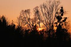 Puesta del sol de los árboles de Silouette Fotos de archivo