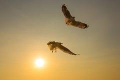 Puesta del sol de los pájaros del dúo del vuelo Imagenes de archivo