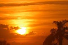 Puesta del sol de Maui de oro hermoso, Hawaii con las palmeras Imagen de archivo libre de regalías