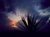 Puesta del sol de Nápoles Foto de archivo