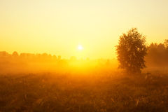 Puesta del sol de niebla en prado Foto de archivo