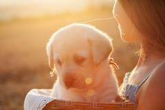 Puesta del sol de observación de la chica joven que sostiene su perro de perrito adorable en una cesta imágenes de archivo libres de regalías