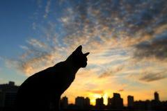 Puesta del sol de observación del gato Fotos de archivo libres de regalías