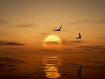 Puesta del sol de oro con Eagles Fotos de archivo libres de regalías