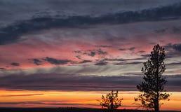 Puesta del sol de oro con las rayas azules y rosadas de nubes Foto de archivo