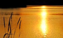 Puesta del sol de oro en el lago Fotografía de archivo