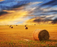 Puesta del sol de oro sobre campo de granja Foto de archivo