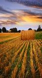 Puesta del sol de oro sobre campo de granja Imágenes de archivo libres de regalías