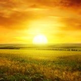 Puesta del sol de oro sobre campo foto de archivo