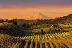 Puesta del sol de oro sobre Hood River Pear Orchard en la primavera de Oregon foto de archivo